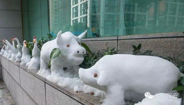 """""""站着""""十来只白色的小动物"""